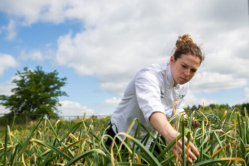 CAS's Executive Chef Ilana Stevenson Cahill harvesting garlic scapes